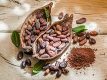 Cocao powder and cocao beans. Stock Images