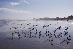 Cocao strand i Florida Arkivfoton