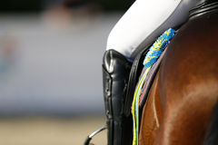 Cocarde sur le cheval victorieux, un regard arrière détaillé avec la jambe du cavalier photos libres de droits