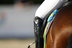 Coccarda sul cavallo vittorioso, uno sguardo posteriore dettagliato con la gamba del cavaliere Fotografie Stock Libere da Diritti