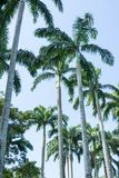 Cocchi alti e stati allineati in un parco Immagine Stock Libera da Diritti