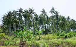 Cocchi in isola tropicale fotografie stock