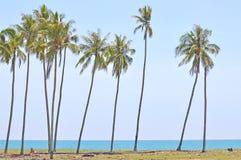 Cocchi sotto cielo blu alla spiaggia del mar Cinese meridionale Fotografia Stock Libera da Diritti