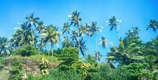 Cocchi sulla riva di Oceano Indiano fotografia stock libera da diritti