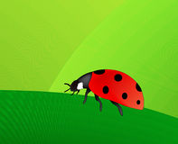 Coccinella (formato di AI disponibile) illustrazione di stock