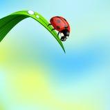 Coccinella su erba. Fotografia Stock Libera da Diritti