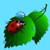 Coccinella su erba con le gocce dell'acqua illustrazione sul blu illustrazione vettoriale