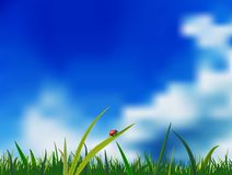 Coccinella su un'erba Fotografia Stock
