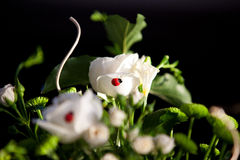 Coccinella su una rosa fotografia stock libera da diritti