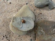 Coccinella sulle rocce impilate fotografia stock