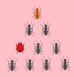Coccinelle dans l'équipe de fourmis Photos stock