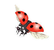 Coccinelle dans l'illustration de mouche Photographie stock libre de droits