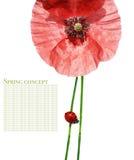 coccinelle de flore Photographie stock libre de droits