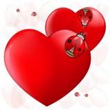 Coccinelle del cuore di amore Fotografie Stock Libere da Diritti