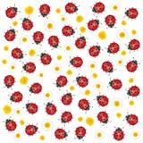 Coccinelle e fiori Fotografie Stock