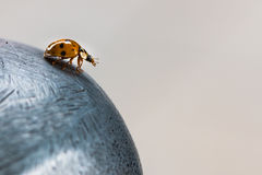Coccinelle orange sur une sphère en métal Photo stock