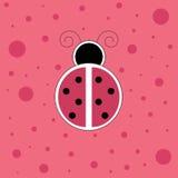 Coccinelle rose Images libres de droits