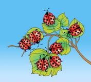 Coccinelle sulle foglie Immagini Stock Libere da Diritti