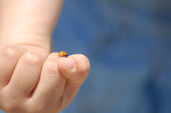 Coccinelle sur la main de l'enfant Photo stock