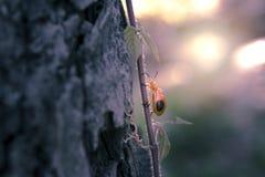 Coccinelle sur le tronc de vigne et lumière du soleil à l'arrière-plan Image stock