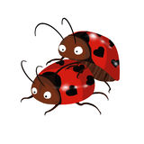 coccinelles illustration stock