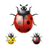 Coccinelles d'isolement sur le fond blanc illustration stock
