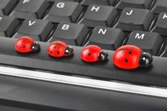 Coccinelles de jouet sur le clavier d'ordinateur Photographie stock