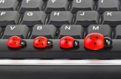 Coccinelles de jouet sur le clavier d'ordinateur Image libre de droits