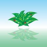 Coccinelles sur des feuilles Photographie stock libre de droits