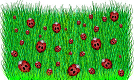 Coccinelles sur l'herbe verte. Photos stock