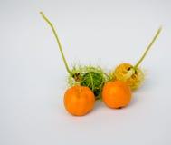 Coccinia Grandis-Gold im Garten ist Efeu Stockfotografie