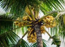 Cocco e frutti al giorno soleggiato Fotografie Stock