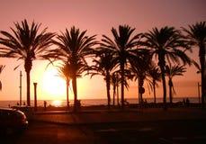 Cocco e tramonto Fotografia Stock