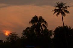 Cocco nella siluetta di tramonto Fotografia Stock