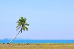 Cocco sotto cielo blu alla spiaggia del mar Cinese meridionale con Fotografia Stock