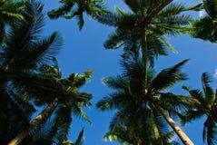 Cocco sotto il cielo blu un giorno di estate Fotografie Stock Libere da Diritti
