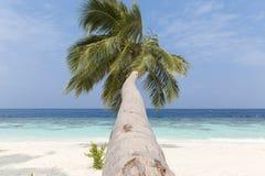Cocco su una spiaggia sabbiosa bianca e su un'acqua cristallina in Maldive fotografia stock