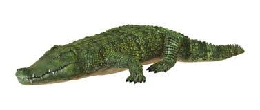 coccodrillo Immagine Stock