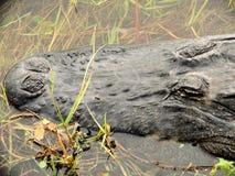 Coccodrillo americano in lago Fotografia Stock Libera da Diritti