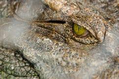 Coccodrillo asiatico Fotografia Stock