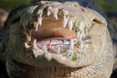 Coccodrillo che mangia i pesci fotografia stock libera da diritti