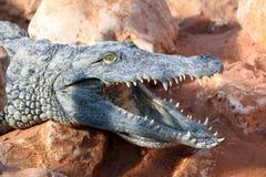 Coccodrillo del Nilo Immagine Stock Libera da Diritti