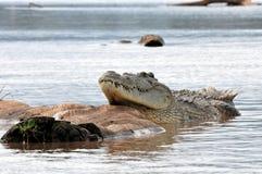 Coccodrillo di Nilo Immagini Stock