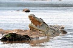 Coccodrillo di Nilo Fotografia Stock