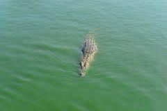 Coccodrillo in fiume Immagini Stock Libere da Diritti