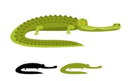 Coccodrillo isolato Buon caimano Animale selvatico Immagine Stock
