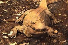 Coccodrillo o alligatore d'acqua dolce in zoo Tailandia Fotografia Stock Libera da Diritti