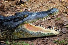 Coccodrillo o alligatore India Fotografia Stock Libera da Diritti