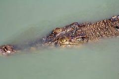 Coccodrillo sotto acqua Fotografie Stock Libere da Diritti