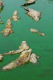 Coccodrillo in Tailandia Immagine Stock
